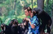 No Image for ACE VENTURA: WHEN NATURE CALLS