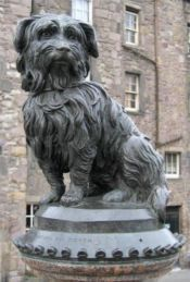 No Image for THE ADVENTURES OF GREYFRIARS BOBBY
