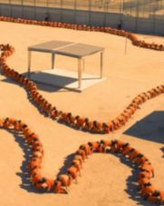 No Image for THE HUMAN CENTIPEDE 3